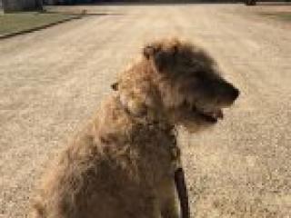 Magnus the dog at Althorp 2018