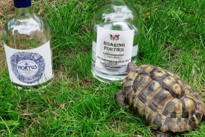Norbert the tortoise chooses Roaring Forties